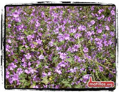 Primavera en Matillas