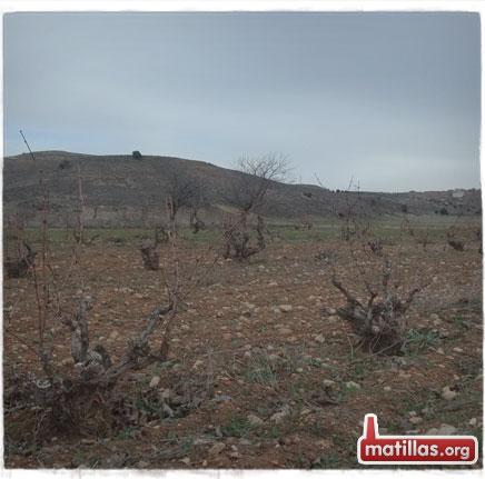 Las viñas en invierno