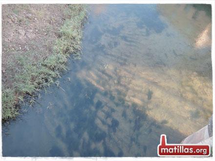 Limpieza río: Los Contras