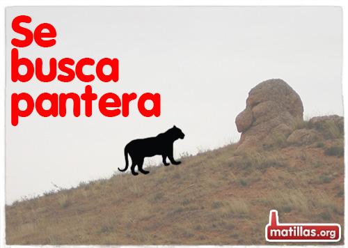 Se busca Pantera